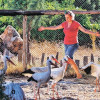 По запросам современного туриста: турецкие курорты предлагают вместо пятизвездочных отелей пасти коз и работать на поле