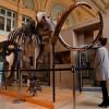 Гигантский 15 000-летний мамонтовый скелет будет выставлен на аукцион во Франции 16 декабря
