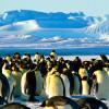 Руководство туризма в Антарктиде убеждает путешественников не кормить пингвинов