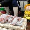 Такого вы еще не видели! На одном из местных рынков Вьетнама туристов привлекает ряженый кот, который продает рыбу со своим хозяином