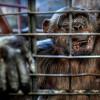 Дикие животные туристического Таиланда — документальный фильм показывает темную сторону