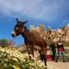 Каппадокия расцвела. Сотни тысяч туристов стекаются в регион для удивительных фотосессий