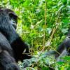 Руанда откроет национальный парк Гишвати-Мукура для посетителей в следующем году