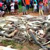 Толпа убивает 292 крокодилов в провинции Папуа Индонезии в отместку за местного мужчину