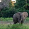 Зимбабвийский туризм возвращается на карту мира