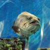 Den Blå Planet — самый большой аквариум в Копенгагене и Северной Европе