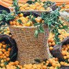 С 15 по 18 ноября Город Сеферихисар провинции Измир приглашает всех желающих на празднование урожая мандаринов региона и «Дни сельского хозяйства»