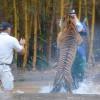 В Таиланде туриста искусал тигр