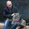 Россия и Иран обменяются особями исчезающих амурских тигров и переднеазиатских леопардов