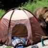 В Мурманской области туристы прогнали нахального медведя «Песней про зайцев» (ВИДЕО)