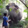 В Таиланде взбесившийся слон убил проводника и скрылся в джунглях с туристами на спине