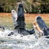 Из-за столкновения катеров во Флориде туристы оказались в озере с аллигаторами