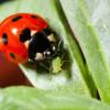 Биологи нашли зависимость в вымирании разных видов хищников