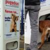 В Стамбуле установили аппараты, которые кормят бродячих животных в обмен на мусор