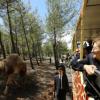 В Турции открылся второй по площади в Европе сафари-парк