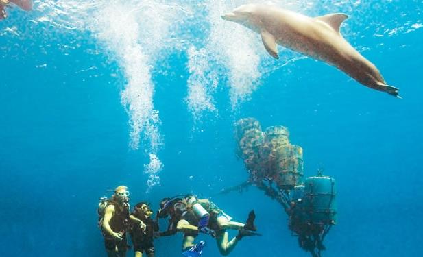 в гостях у дельфинов
