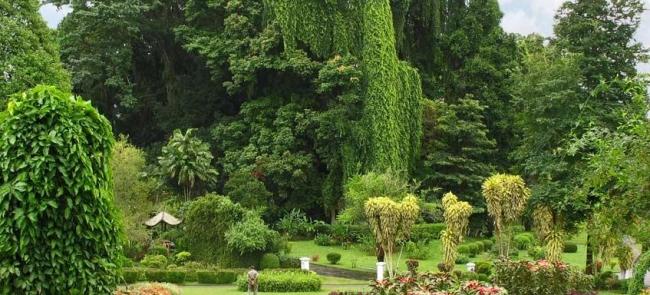 фантастический вид на сад специй