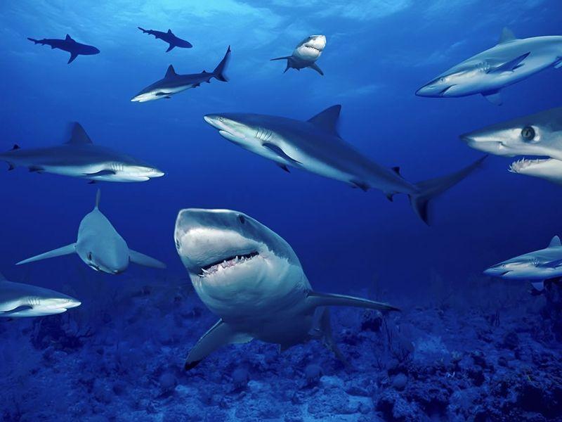 фото акул в египте