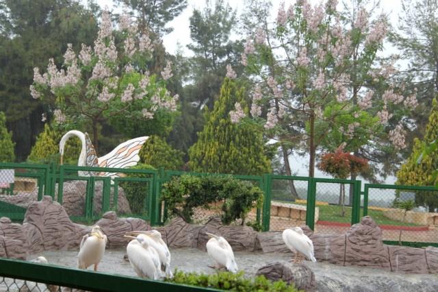 Зоопарк в Газиантепе