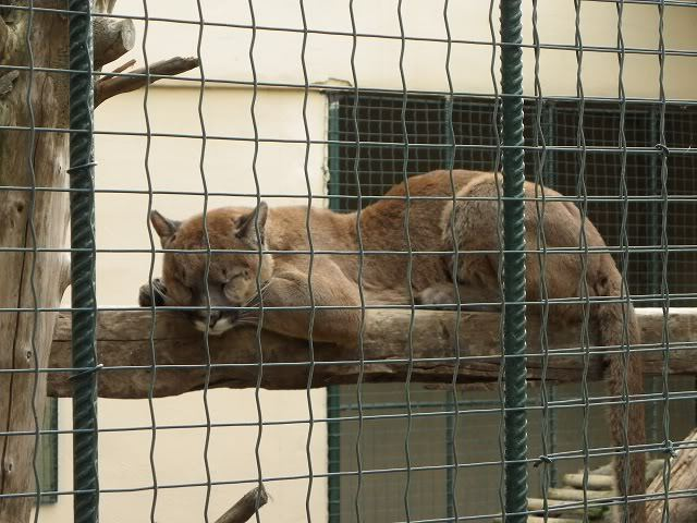 стамбульский зоопарк фото