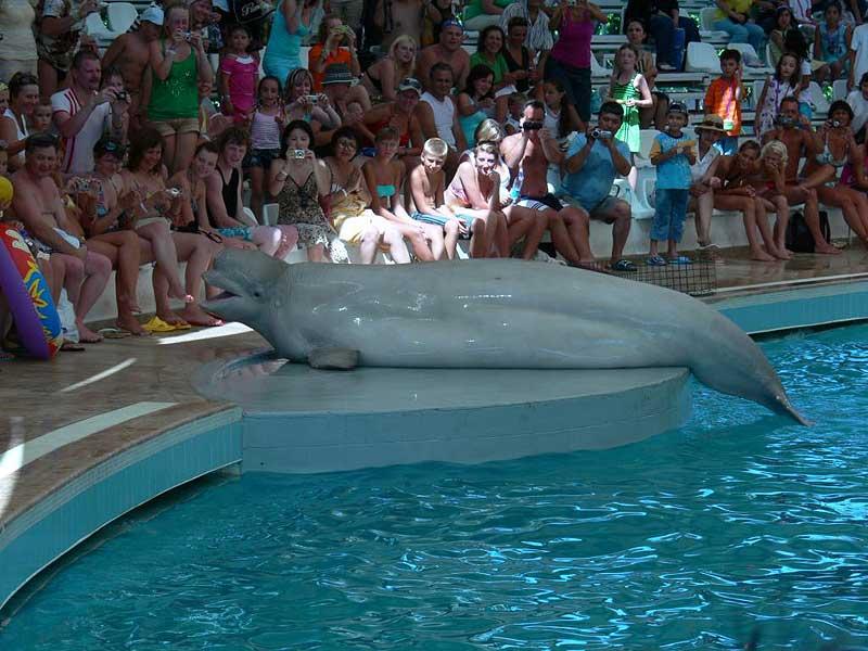 дельфинарий в анталии фото