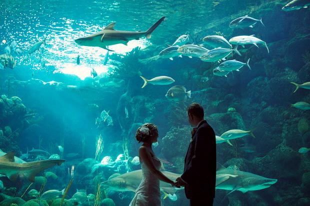 аквариум в анталии фото
