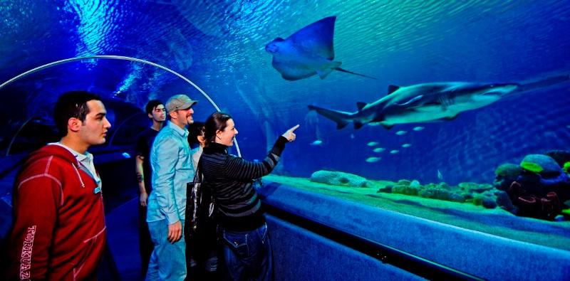 аквариум в стамбуле Туркуазу фото