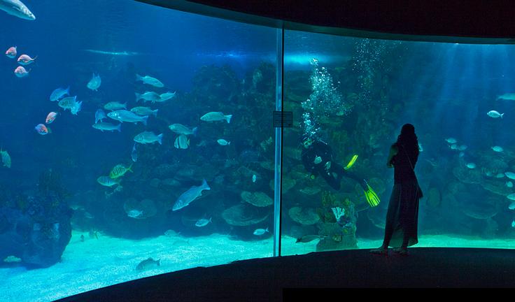океанариум в стамбуле фото