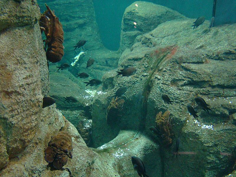 турецкий аквариум фото