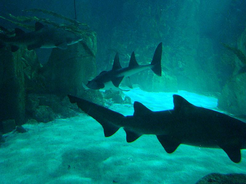 океанариум в турции фото