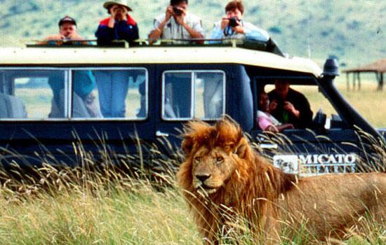 Сафари-туры в Африку
