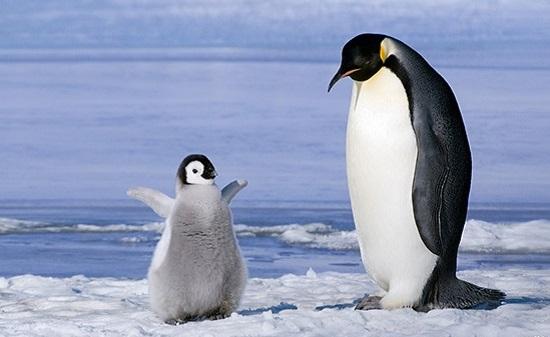 Путешествия в Антарктиду и Арктику приобретают вседоступность