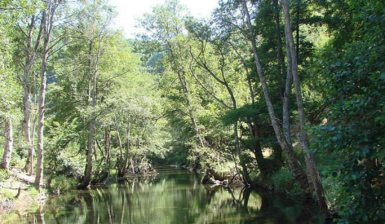 Затопленные леса Игнеада – уникальное место для активного отдыха