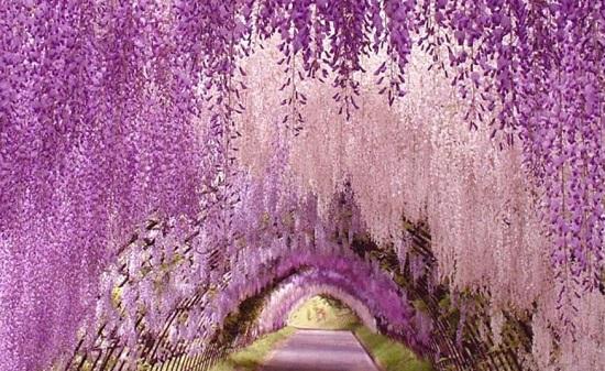 Парк Асикага - место, где захватывает дух от красоты