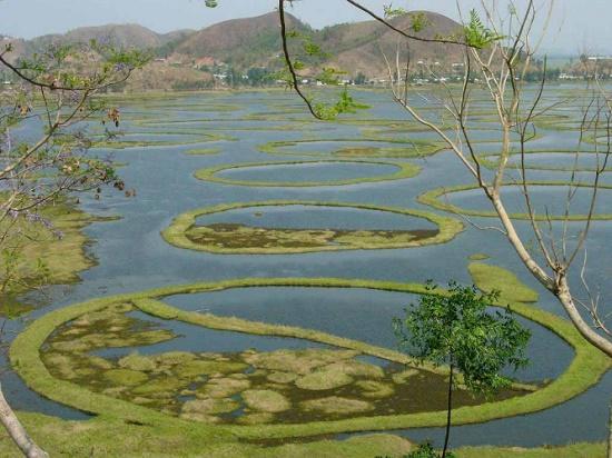 Пхумди — удивительные плавающие острова в Индии