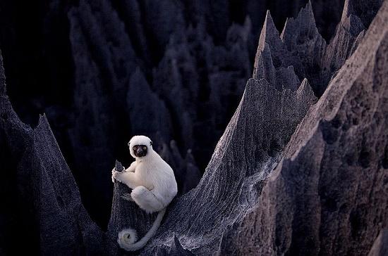 Самое необычное место на земле - Каменный лес заповедника Цинги-де-Бемараха