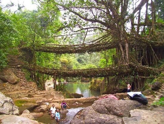 Мосты, созданные самой природой в прекрасной Индии