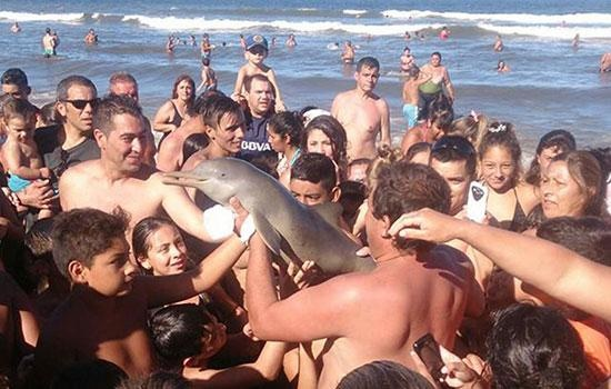 Туристы в Аргентине убили дельфина во время попыток селфи