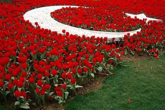 Стамбульский фестивале тюльпанов ждет гостей 1 апреля 2017 года