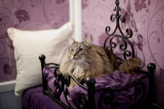 В отеле Абу-Даби теперь работают кошки