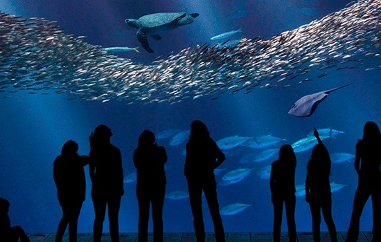 Лучшие аквариумы США