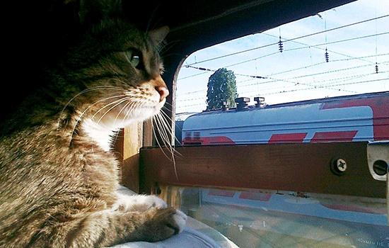 Уход за животными во время отпуска: путешествия с любимыми питомцами