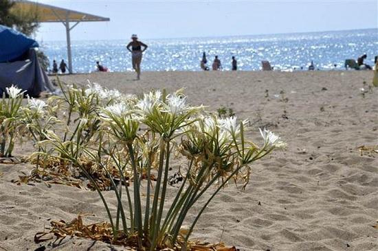 За сорванную лилию в Анталии грозит штраф в размере 38 000 лир