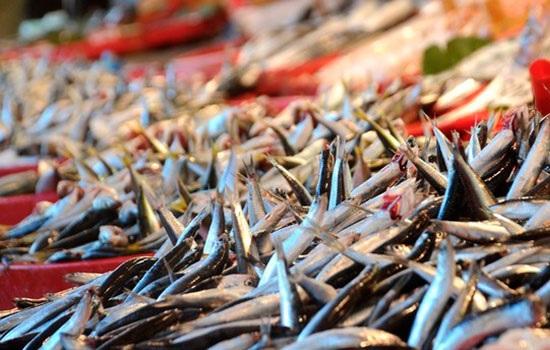 Ноябрь - сезон хамсы в Турции, которую сейчас можно попробовать во многих формах