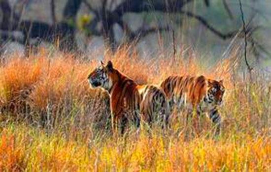 Тропический сад с генофондом возле Надугани в Гудалуре южной Индии рассматривается как место экотуризма