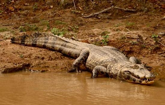 Посетите амазонские дождливые леса в Боливии