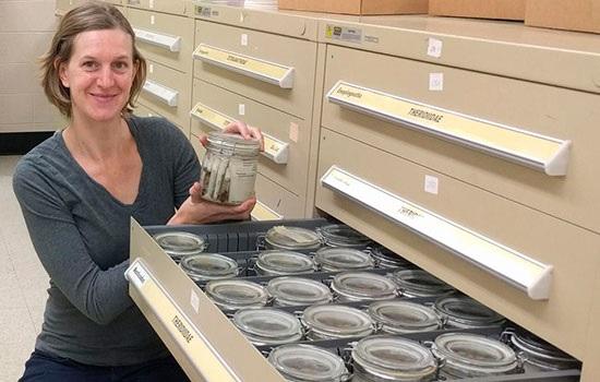 Ученые открыли новые виды пауков-убийц на Мадагаскаре