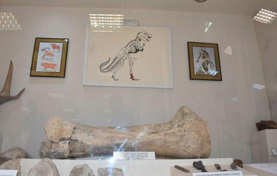 У туристов повышенный интерес к окаменелостям динозавра в Карсе
