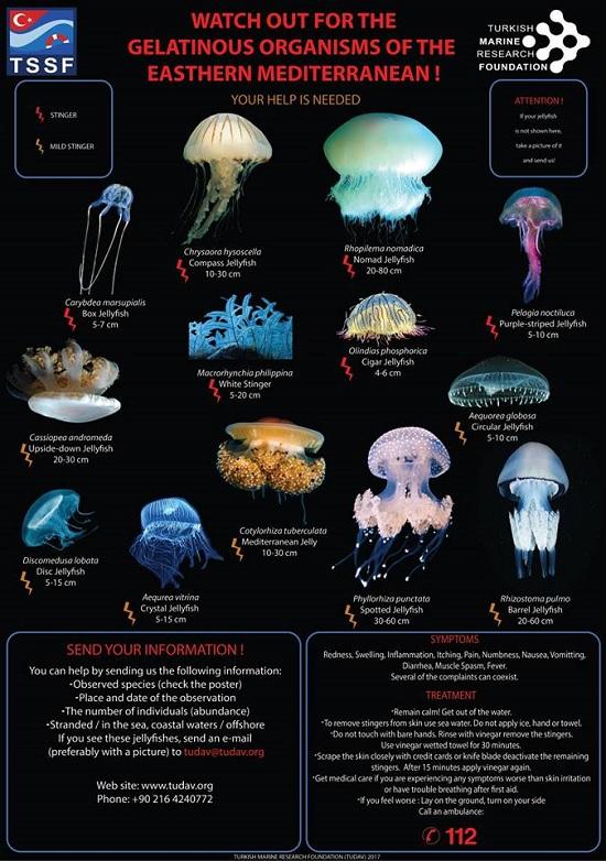 Ученые: ядовитые медузы заполонили Средиземное море