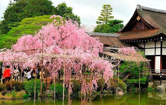 Красивые сады японского города Киото